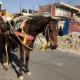 Transportación de animales en vías públicas