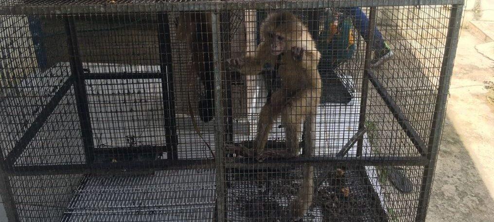 Procuraduría de Medio Ambiente arresta a dos personas por introducción y explotación de animales exóticos en Punta Cana